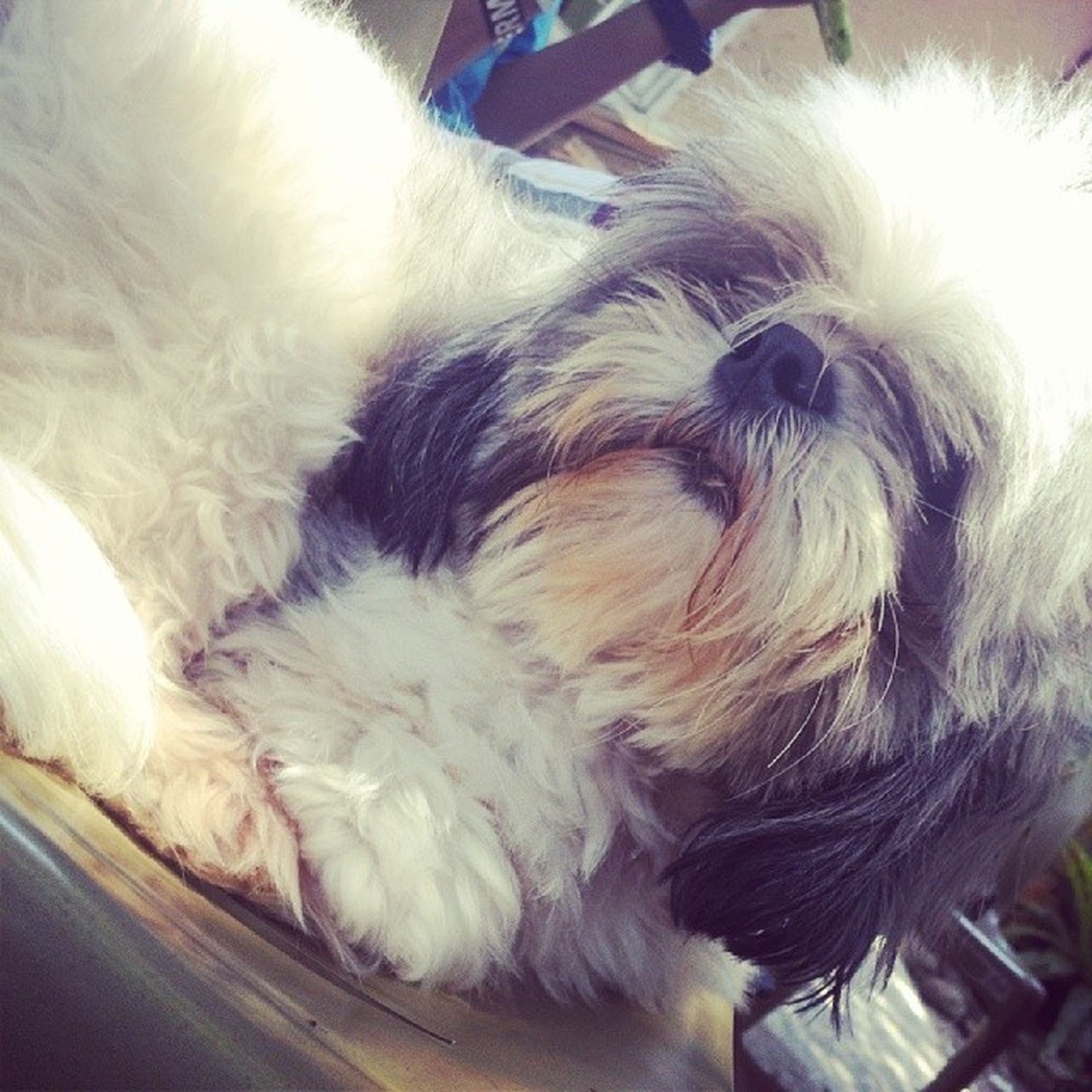 pets, domestic animals, indoors, dog, mammal, one animal, animal themes, relaxation, sleeping, high angle view, close-up, lying down, home interior, resting, lifestyles, animal hair, sitting, person