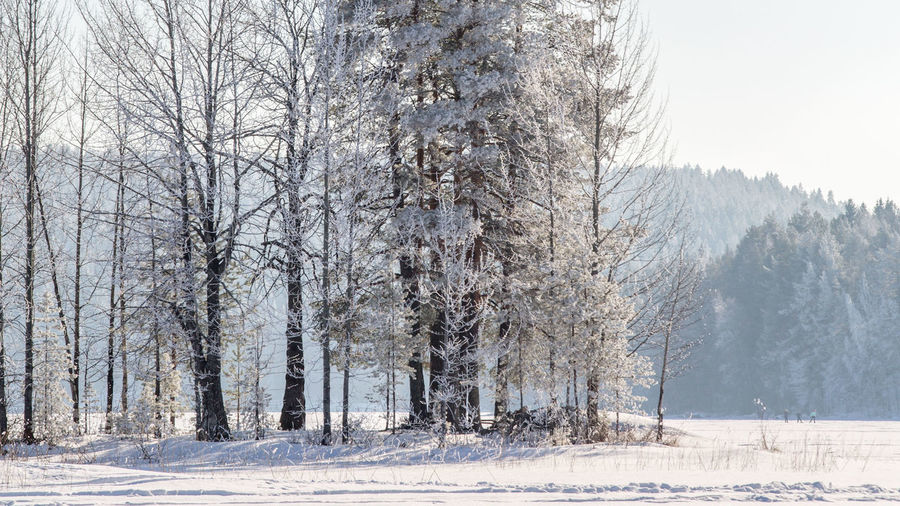 Bare Tree Beauty In Nature Cold Temperature Day Forest Landscape Nature No People Outdoors Scenics Sky Snow Snowing Tranquil Scene Tranquility Tree Weather Winter Shades Of Winter