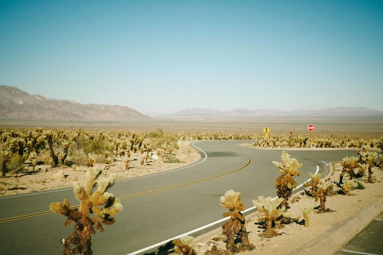Endless road. America Clear Sky Day Desert Landscape Motorcycle Racing No People Outdoors Road Road Sky Sports Race Sports Track Transportation Winding Road The Drive.