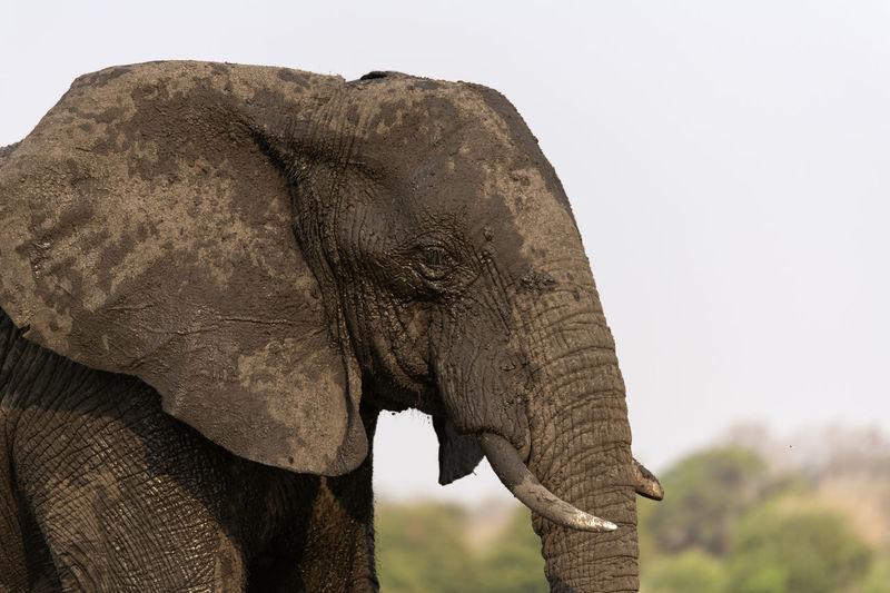 Close-up of elephant on land against sky