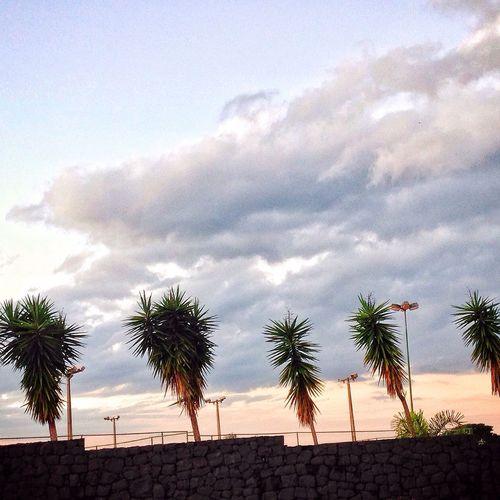 Florida Coqueiros Sol Verão Sun Praia Calor Yesterday