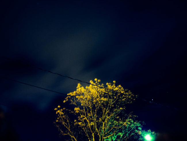 Cable Electricity  Tree Power Supply Power Line  Electricity Pylon Illuminated Sky No People Night Nature