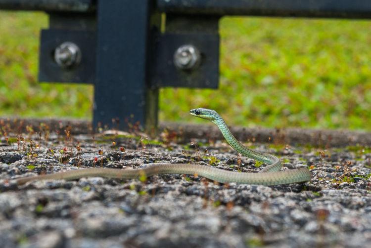 Close-up of lizard on street