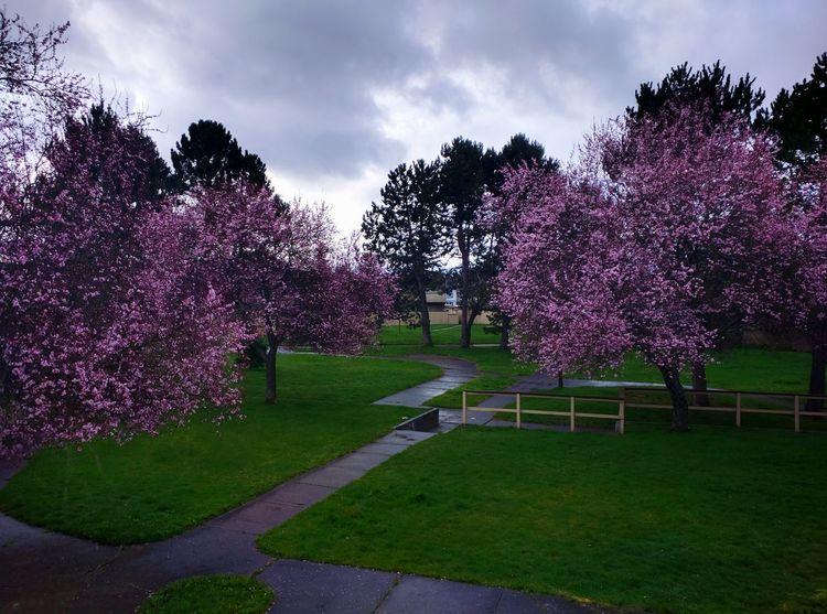 My room's window.Picture taken from nexus 6 Pink Flowers Pink Trees