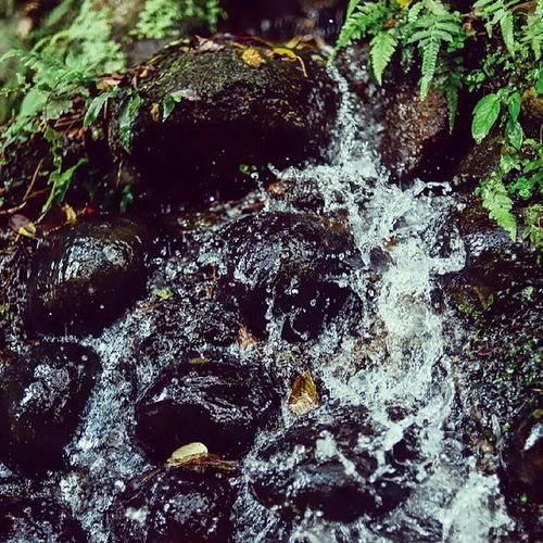 Fresh Spring Waterfall Crystalized sulfid macro mytravelgram mystic travelingram travelphotography mountain vulcano asia Taipei taiwan nikond600 photooftheday picoftheday nature 陽明山 台灣 台北
