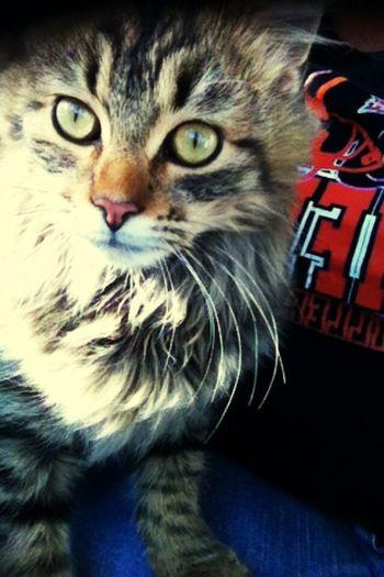 Catsofinstagram Cute Pets Cat Kitty Savethestrays