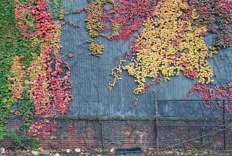 Colorful Autumn leaves on the side of an industrial building. Abstract Autumn Beauty In Nature Change Growth Man Versus Nature Multi Colored Natural Versus Manmade Nature No People Northeast Ohio Outdoors