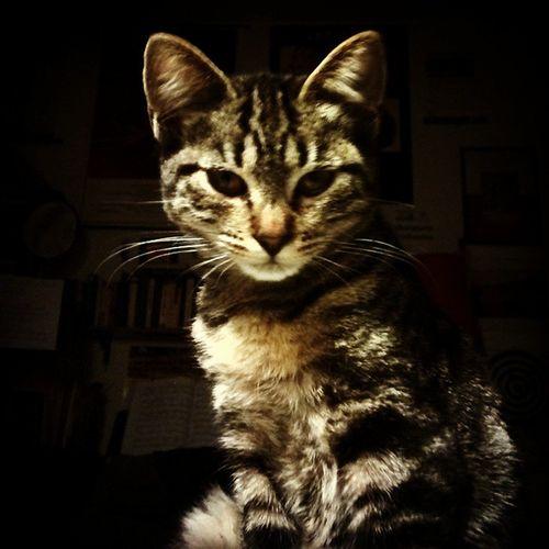 Cat in the Dark Stanislao STAN eyes 50shades