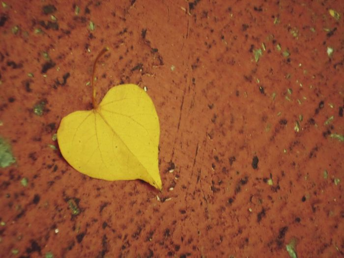 High angle view of yellow leaf on land