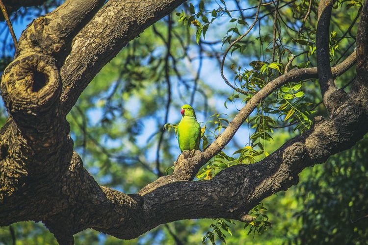Sammy is a sweetIndianring-neck are very good at learning words they have excellent talking abilities.Indianring-neck parakeets are also known as rose-ringed parakeets. Love Green Color Birdof EyeEm Birds Of EyeEm  Bird Photography Bird Of Prey Birds🐦⛅ Birds_collection Birds Birdwatching Bird Tree Perching Branch Reptile Tree Trunk Plant Life Parrot EyeEmNewHere