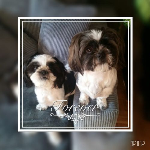 Pets Dog Animal Puppy I Love My Dog's Doggies I Love My Dog Love Animal Themes My Big Love ♥ My Love Love ♥ ❤❤❤