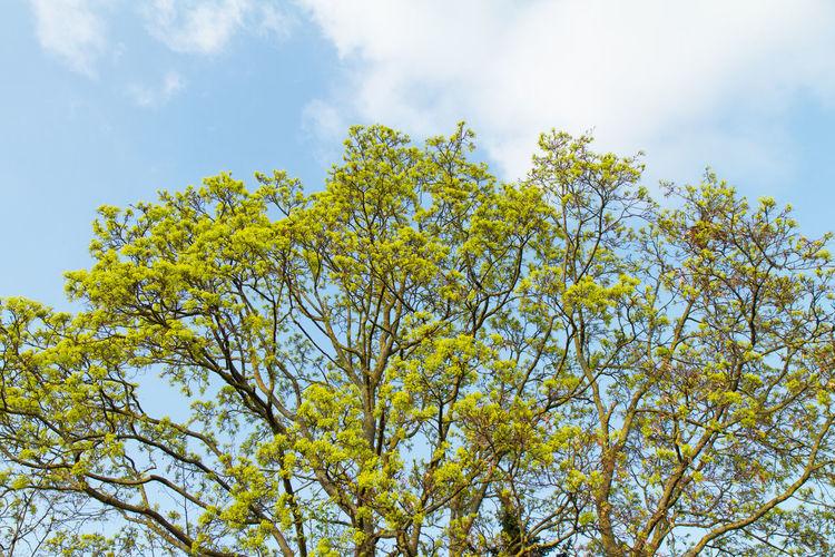 Tree Tree Trees