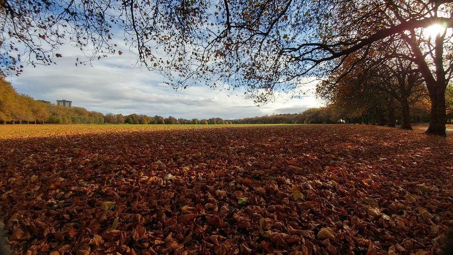 Sefton Park II,