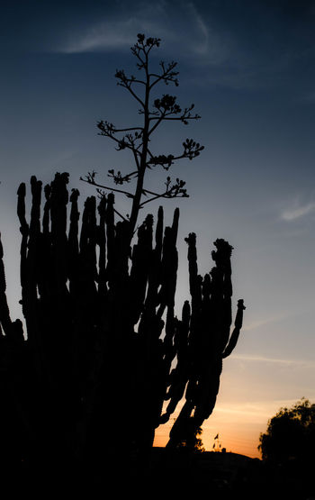 Low angle view of silhouette cactus against sky during sunset
