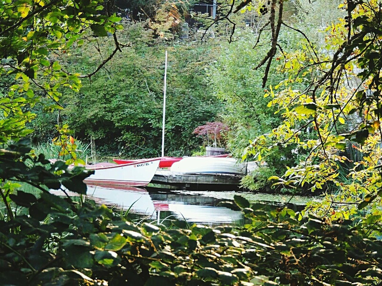 nautical vessel, growth, transportation, nature, boat, tree, mode of transport, leaf, water, lake, plant, moored, day, no people, outdoors, rowboat, branch, beauty in nature, tranquility