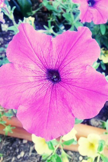 A Beautiful Purple Flower in my Garden! First Eyeem Photo