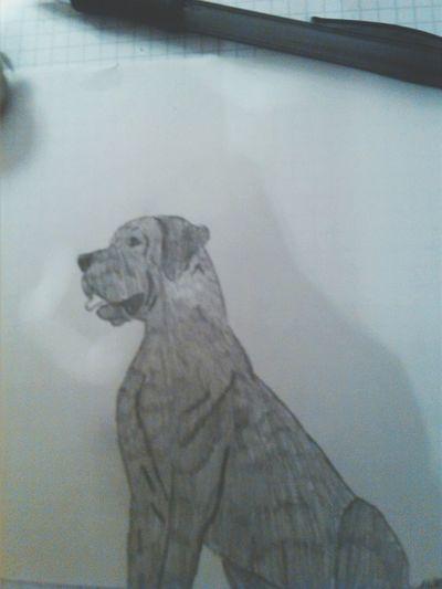 Nicht perfekt aber ich liebe doggen :D Drawing