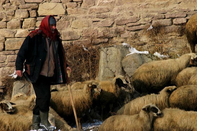 Shepherd in