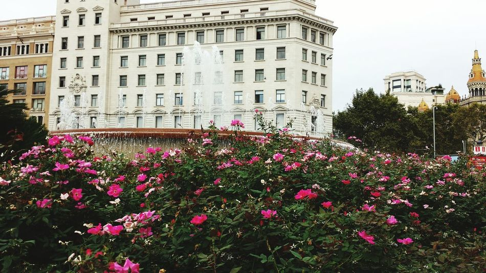 Roses🌹 Taking Photos A Lot Of Water Wow! Enjoying This Beautiful Wheather Relaxing View Beautiful Day Have A Lot Of Fun  Sunshine ☀ Barcelona