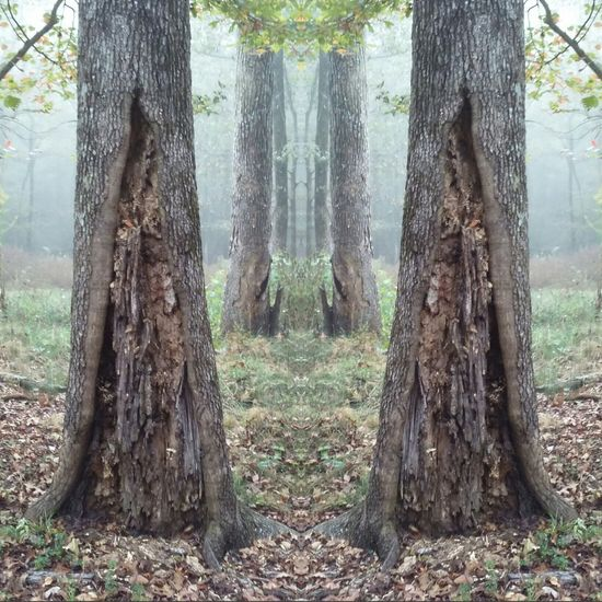 Trees Nature Outdoors Nature Photography Mirror Image