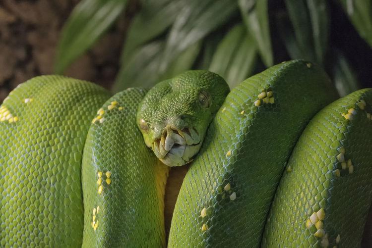 Close-up of green snake at zoo