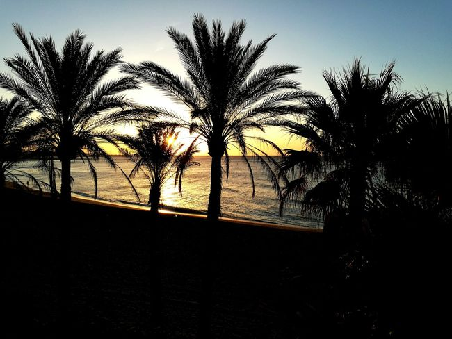 Palm Trees Sunrise Beach At Sunrise Golden Light Silhouettes Color Of Life My Year My View Live For The Story