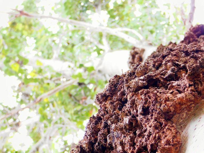 VitoriaGasteiz Txusty Oldtree Closeview Tree Close-up