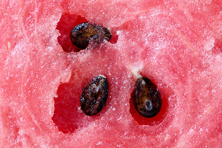 watermelon Close-up Day Fruit Juice Macro No People Outdoors Red Seed Summer Vitamins Watermelon Seeds Watermelon🍉🍉🍉