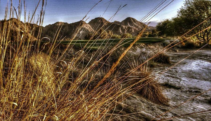 Palm Desert Palmdesert Palm Springs Palmsprings Coachella2016 Coachella Stagecoach2016 Stagecoach Timages Poetographer