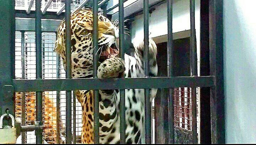 Cage Animal