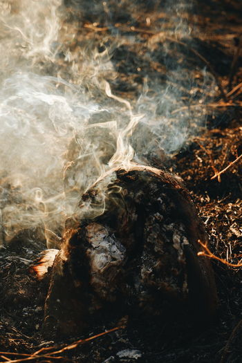 Smoke - Physical Structure Nature No People Close-up Heat - Temperature Burning Land Tree Day Outdoors Fire Log Fire - Natural Phenomenon Flame Plant Burnt Wood Orange Color Forest Bonfire Campfire Changing Form