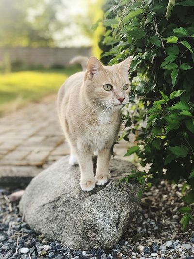 Cat looking away while standing on rock
