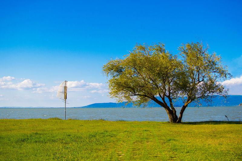 Tree On Landscape Against Blue Sky