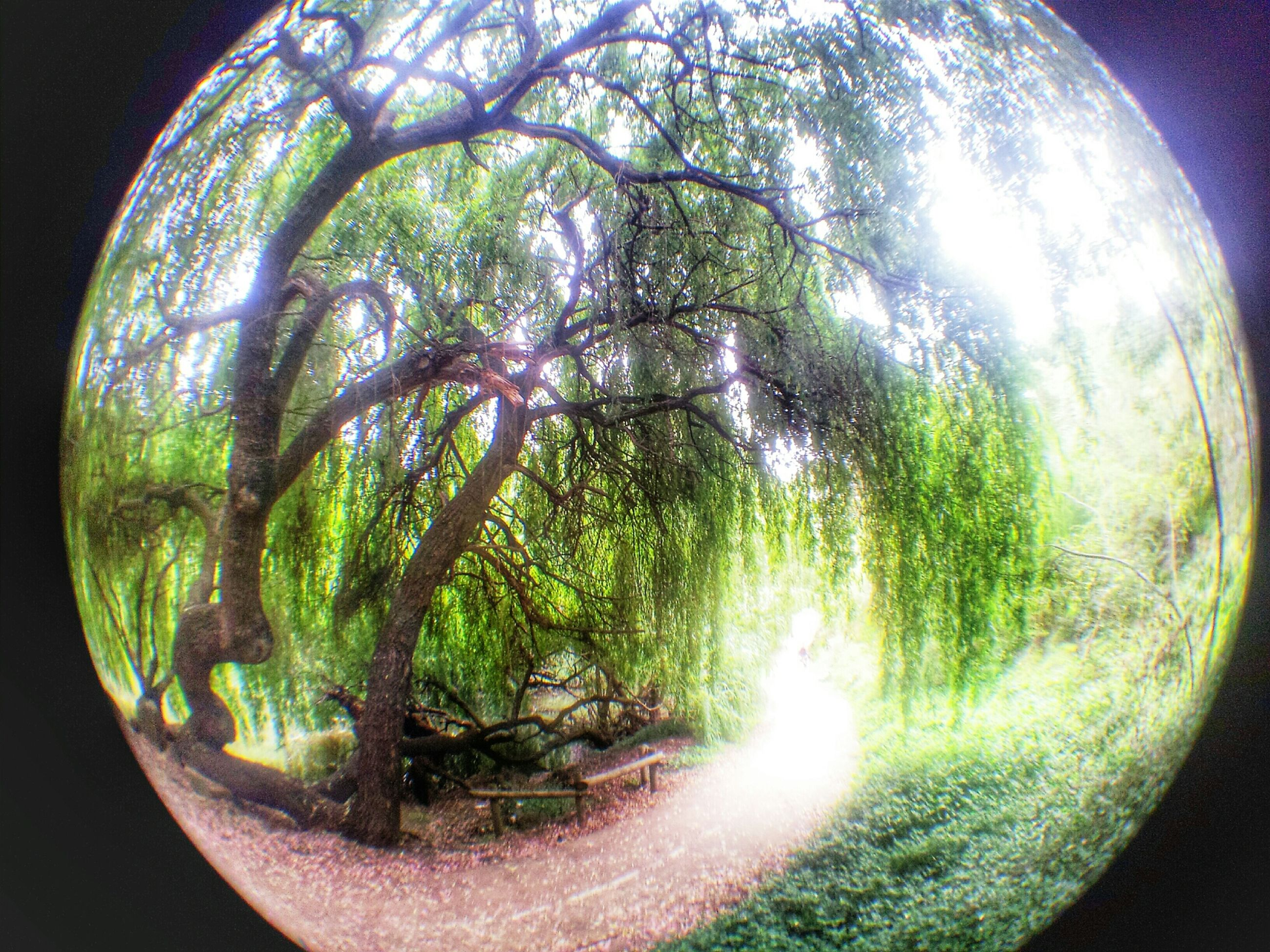 circle, tree, green color, nature, sky, growth, beauty in nature, reflection, geometric shape, tranquility, round, fish-eye lens, water, sphere, tranquil scene, transparent, scenics, close-up, no people, outdoors