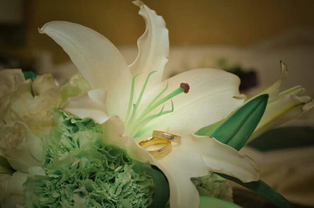 flower, freshness, no people, plant, green color, petal, flower head, close-up, growth, day, fragility, indoors, nature, food