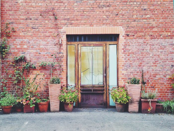 Potted plants arranged outside house