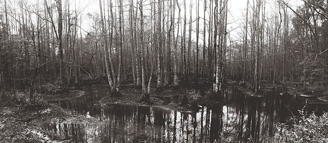 Mississippi swampland. Tree Nature Lake Reflection Water Forest Tranquility Bare Tree Outdoors No People Growth Beauty In Nature Day Scenics Tree Trunk Sky Perspectives On Nature Black And White Friday EyeEm Ready