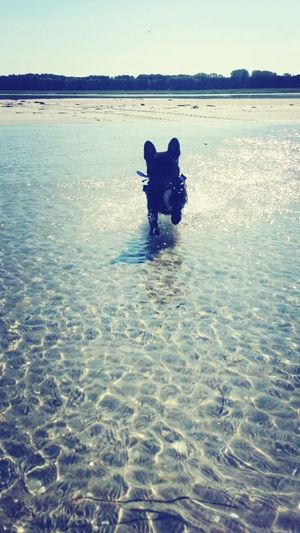 ❤my Dog