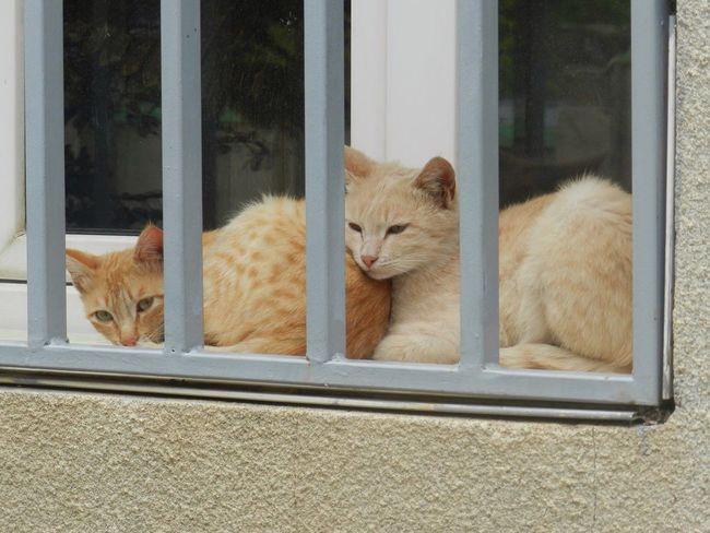 Taking Photos Eyemnaturelover Eyeforphotography Animal Nofilter No People Enjoying Life Hello World Pets Domestic Cat Ginger Cat Animal Themes Cat Cat Family Sleepy