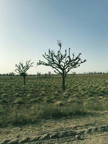 Love Tree Nature Landscape No People Social Issues Tranquility Sky Bare Tree Outdoors Agriculture Day Rural Scene Animal Wildlife Freshness Adventure Beauty In Nature Tranquility Beach One Person No Love </3 Scenics