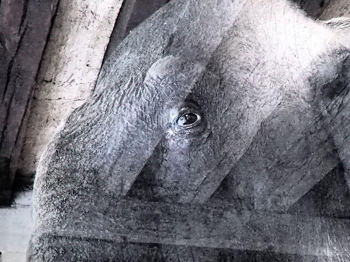 Close-up of animal eye