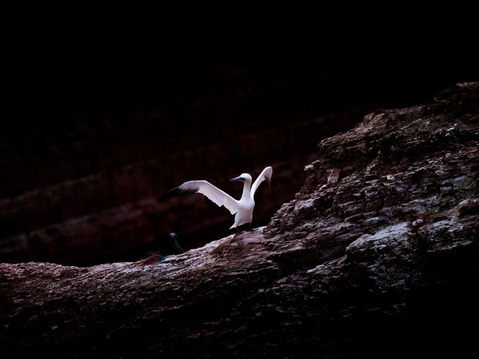 Low angle view of bird on rock