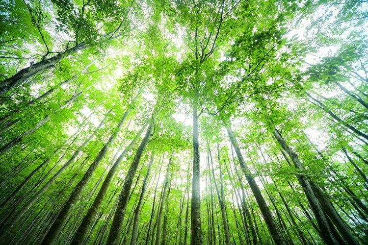 日が射して、空も明るくなってきた。 WoodLand Tree Plant Low Angle View Land Green Color Beauty In Nature Forest Growth Tranquility Nature Tall - High Branch Tranquil Scene No People Scenics - Nature