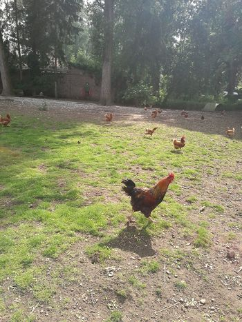 Need for speed, it is feeding time, chicken run, no angry birds