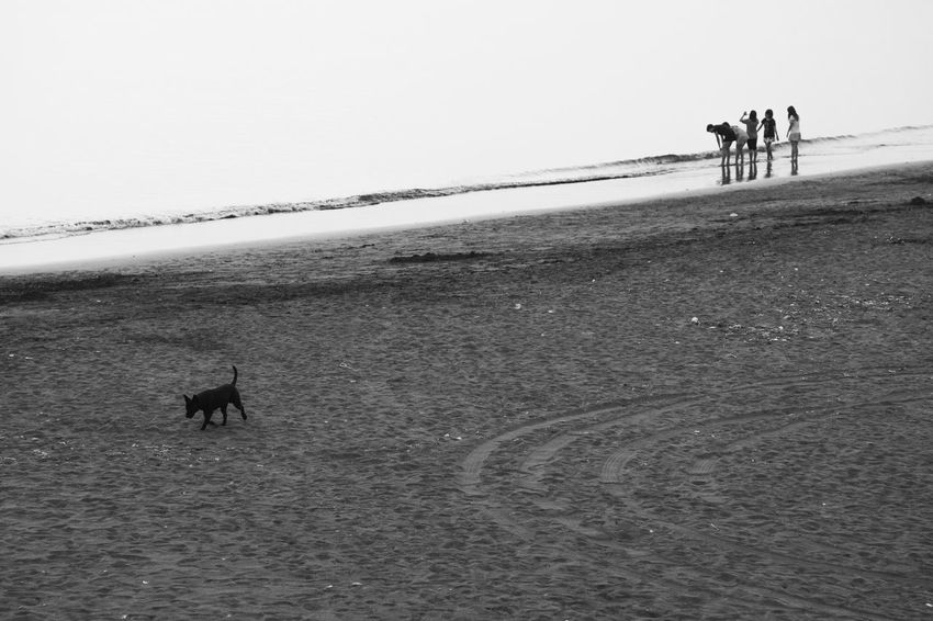 Black & White Adult Animal Themes Beach Black And White Photography Blackandwhite Photography Cold Temperature Day Dog Domestic Animals Full Length Mammal Nature One Animal Only Men Outdoors People Pets Running Sand Sea Sky Walking Water Winter