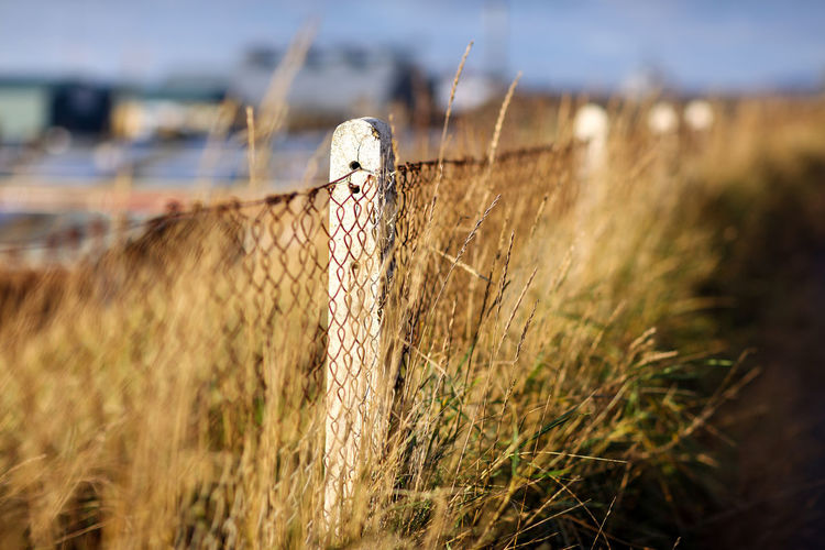 Seaside Brighton Brighton Beach Brighton Uk Brighton And Hove Selective Focus Grass No People Day Field Fence Outdoors Boundary Landscape Barrier Wire Roadside