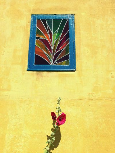 Flower Window Lead Blue Window Frame No People Yellow Multi Colored Day Outdoors