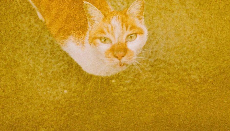 Portrait of cat on orange wall