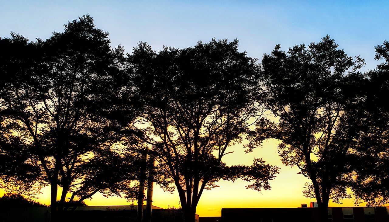 tree, silhouette, sky, plant, sunset, beauty in nature, scenics - nature, tranquility, growth, nature, no people, tranquil scene, outdoors, idyllic, orange color, branch, sunlight, low angle view, non-urban scene, environment