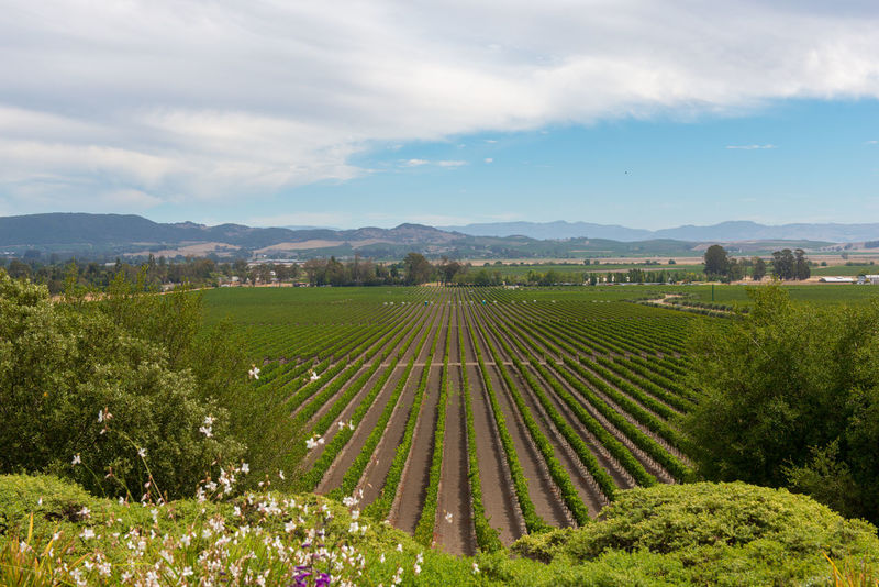 Agriculture Beauty In Nature Cloud - Sky Day Farm Field Green Color Growth Landscape Mountain Mountain Range Napa Valley Nature No People Outdoors Rural Scene Scenics Sky Tranquil Scene Tranquility Tree Vineyard Winemaking